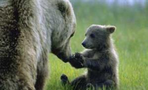 Baby Bear offering Reiki Hands